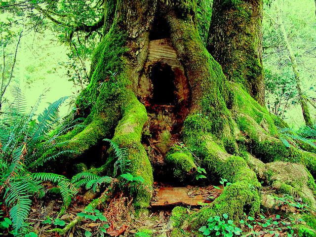 Flickr_tree